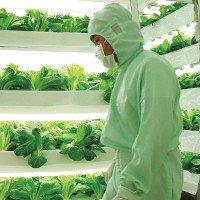 4 giải pháp nông trại tiết kiệm diện tích trồng rau xanh hữu cơ