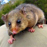 4 sinh vật có thể trở về được từ cõi chết trong niềm hân hoan của khoa học