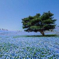 4 triệu bông hoa