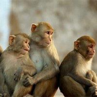 40 sự thật đầy thú vị về loài khỉ mà bạn chưa biết
