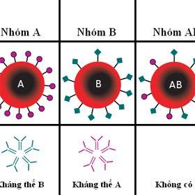 5 điều về sức khỏe có liên quan tới nhóm máu của bạn