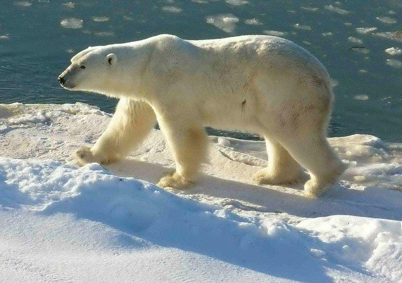 6 hậu quả rõ nhất của biến đổi khí hậu