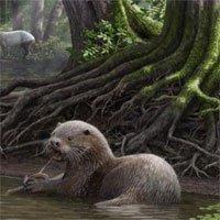 6 triệu năm trước, loài rái cá khổng lồ này đã xuất hiện trên Trái Đất