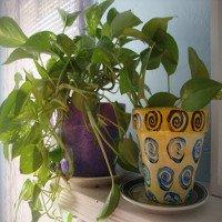 7 cách đơn giản giảm ô nhiễm không khí trong nhà của bạn