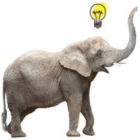 7 đặc điểm chứng minh voi là loài động vật cực kỳ thông minh