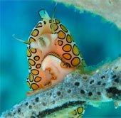 7 sinh vật kỳ quái nhất đại dương