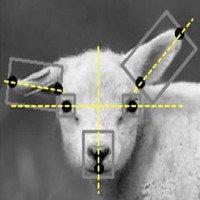 AI giúp phát hiện sớm chính xác đến 80% tình trạng bệnh ở động vật