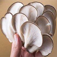 Ăn nhiều nấm để phòng chống suy giảm nhận thức và thoái hóa thần kinh về già