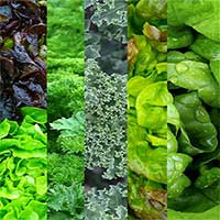 Ăn rau xanh hợp lý có thể giúp ngăn ngừa bệnh gan nhiễm mỡ