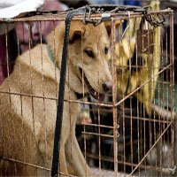 Ăn thịt chó - tập tục gây tranh cãi trong lịch sử