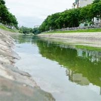 Ảnh cận cảnh dòng nước xanh ngắt hiếm thấy tại sông Tô Lịch, cá bơi 'nhộn nhịp' hàng đàn