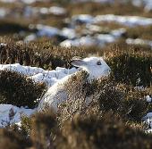 Ảnh động vật đẹp nhất tuần qua: Thỏ rừng trên thảo nguyên