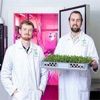Anh triển khai công nghệ khí canh để trồng rau xanh
