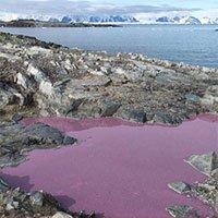 Ao nước giữa Nam Cực chuyển thành màu tím, các nhà khoa học vẫn chưa hiểu tại sao