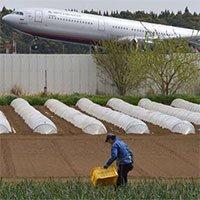 Bác nông dân từ chối 40 tỷ tiền bồi thường để trồng rau giữa sân bay