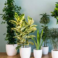 Bạn có biết cây trồng trong nhà di chuyển như thế nào trong một ngày không?