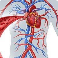 Bằng cách nào để đưa oxy đến tất cả tế bào trong cơ thể?