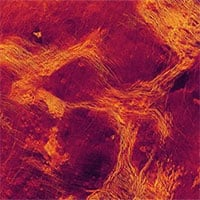 Bằng chứng về hoạt động địa chất trên sao Kim