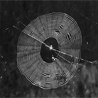 Bào chế vắc xin dựa vào... tơ nhện