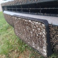 Bão Harvey vừa tan, xuất hiện đàn muỗi hàng triệu con