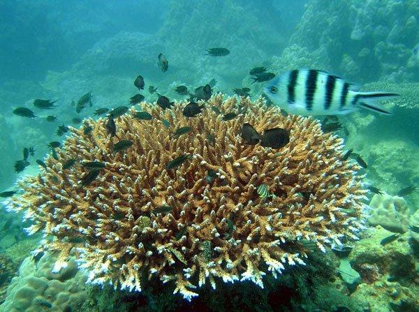 Bảo vệ cấp bách hệ sinh thái rạn san hô ở Phú Quốc