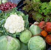 Bắp cải, súp lơ có thể chống phóng xạ