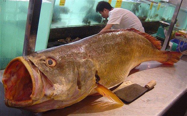 Bắt được cá sắp tuyệt chủng trị giá gần 10 tỉ