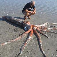 Bất ngờ phát hiện mực khổng lồ nặng 200kg dạt vào bờ biển