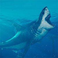 Bất ngờ về tập tính nuôi con của cá mập lớn nhất đại dương thời tiền sử