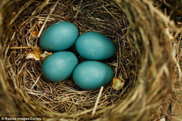 Bất ngờ với những quả trứng có màu sắc rực rỡ để ngụy trang của khủng long