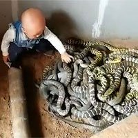 Bé trai chưa biết nói nghịch đàn rắn như đồ chơi ở Trung Quốc
