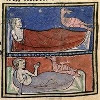 Bí ẩn loài chim thần lông trắng như tuyết, chữa được bách bệnh?