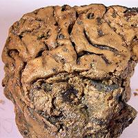 Bí ẩn não người cổ đại tồn tại nguyên vẹn trong 2.600 năm không phân huỷ
