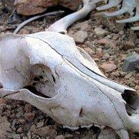 Bí ẩn rợn người về những linh hồn ở Thung lũng Chết