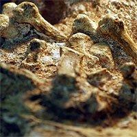 Bí ẩn sinh vật 2 triệu tuổi mang