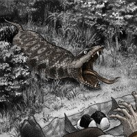 Bí ẩn sinh vật huyền bí được săn lùng ráo riết ở Nhật Bản