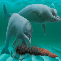 Bí ẩn về loài cá heo