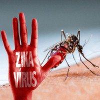 Bỉ ghi nhận 32 trường hợp nhiễm virus Zika