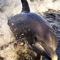 Bi kịch của cá heo châu Âu: Môi trường sống ô nhiễm, nồng độ thủy ngân cao kỷ lục