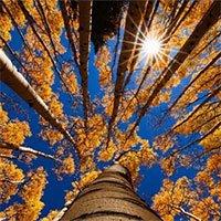 Bí mật 1.000 năm hoạt động của Mặt trời ẩn giấu trong các cây trên Trái đất