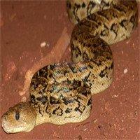 Bí mật đáng sợ của loài rắn mà đến bây giờ khoa học mới tiết lộ