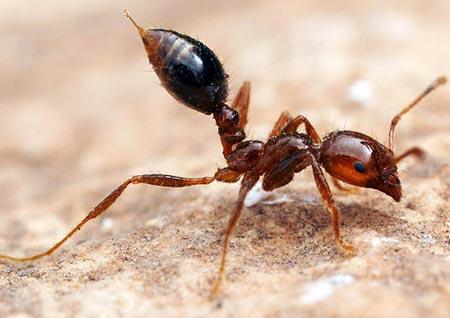 Bí mật giấc ngủ của kiến