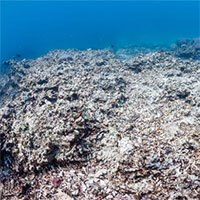 Biến đổi khí hậu làm thay đổi độ pH của biển, quay trở về mức như 14 triệu năm trước