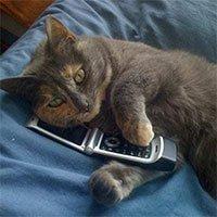 Biến mèo thành điện thoại, sự thật khó tin nhưng có thật trong lịch sử