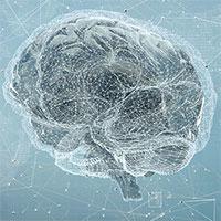 Bộ não của chúng ta có dung lượng bao nhiêu, và nó có thể