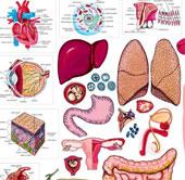 Bộ phận nào của cơ thể con người