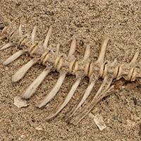 Bộ xương cá cổ đại tiết lộ chế độ ăn kiêng của người Do Thái