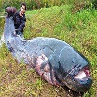 Bơi theo cá khổng lồ, càng kéo nó lên bờ thanh niên sốc khi thấy hình hài con vật