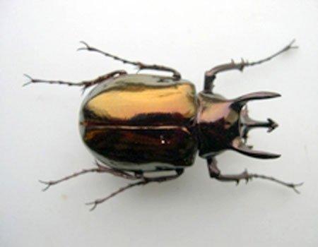 Bốn loài côn trùng sắp vào Sách đỏ