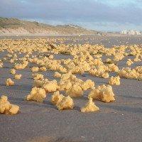 Bọt biển màu vàng không rõ nguồn gốc tràn ngập bãi biển Pháp